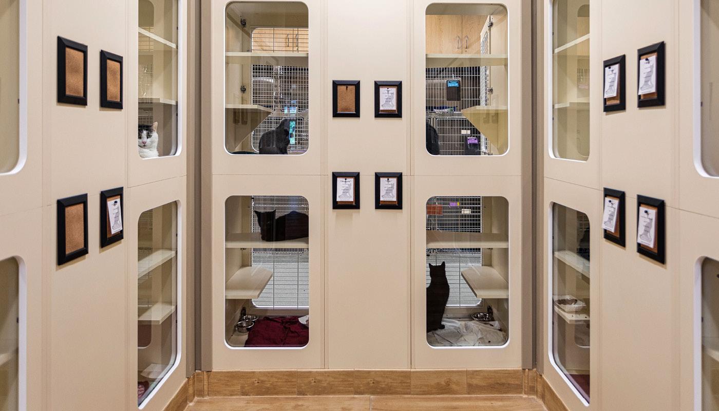 Bangor Humane Society Renovation & Expansion